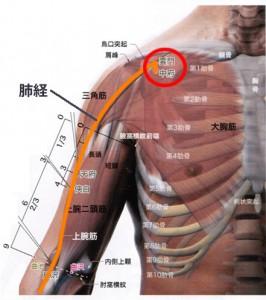 手の太陰肺経(解剖図あり)