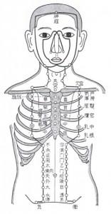 陽明胃経(一部)