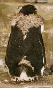 ハート型のショール