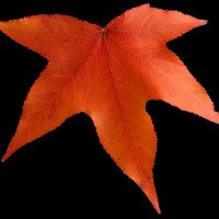 秋の落ち葉